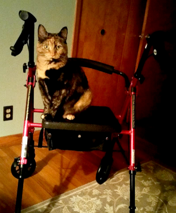 cat on rollator.PNG
