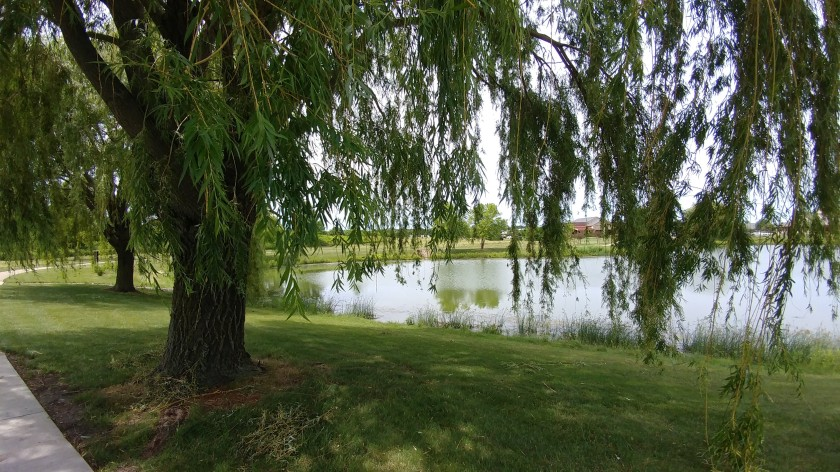 under willow