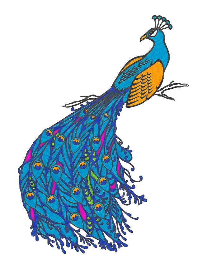 adult coloring book peacock